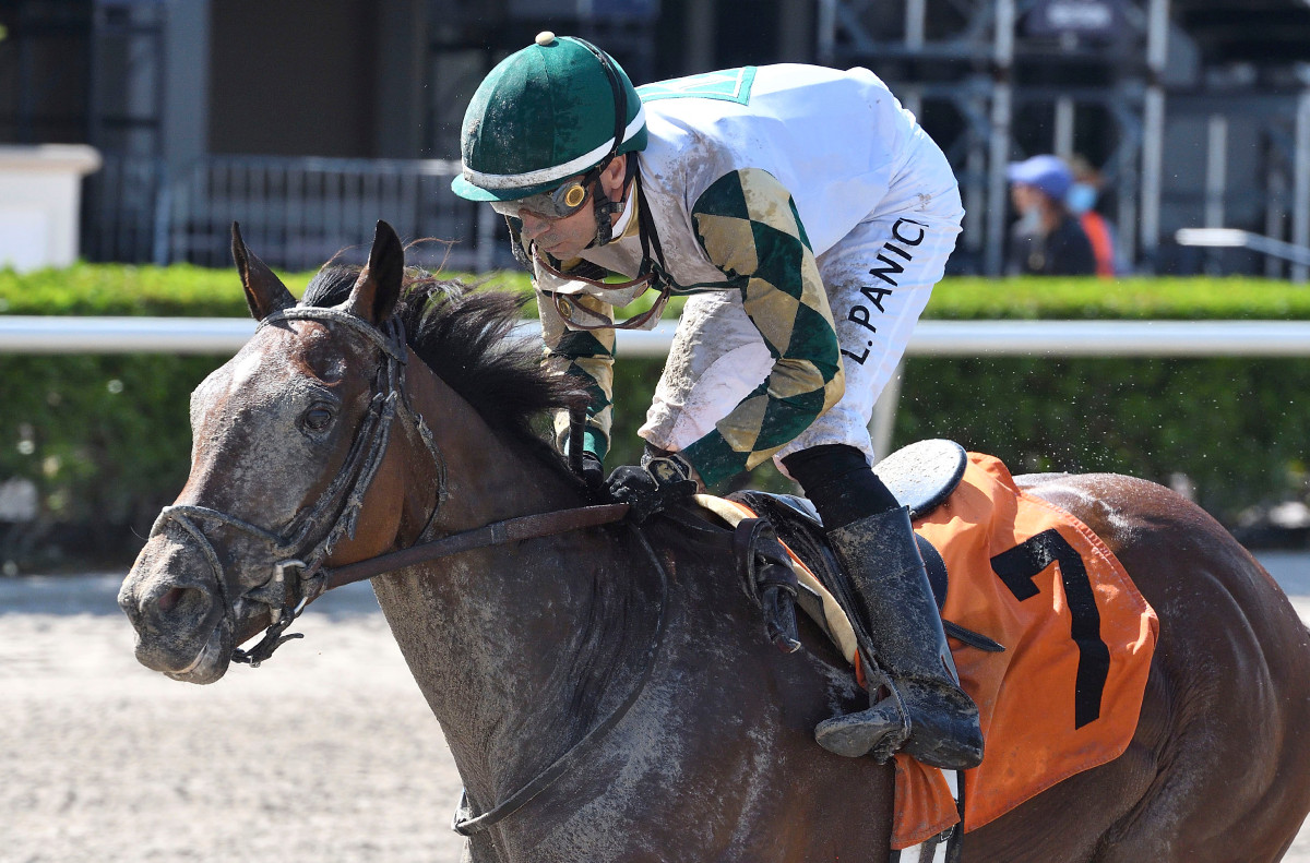 Sole Volante heading into Belmont Stakes on a roll