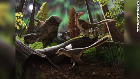 Baby raptor discovered in Alaska may have been a permanent resident of the ancient Arctic