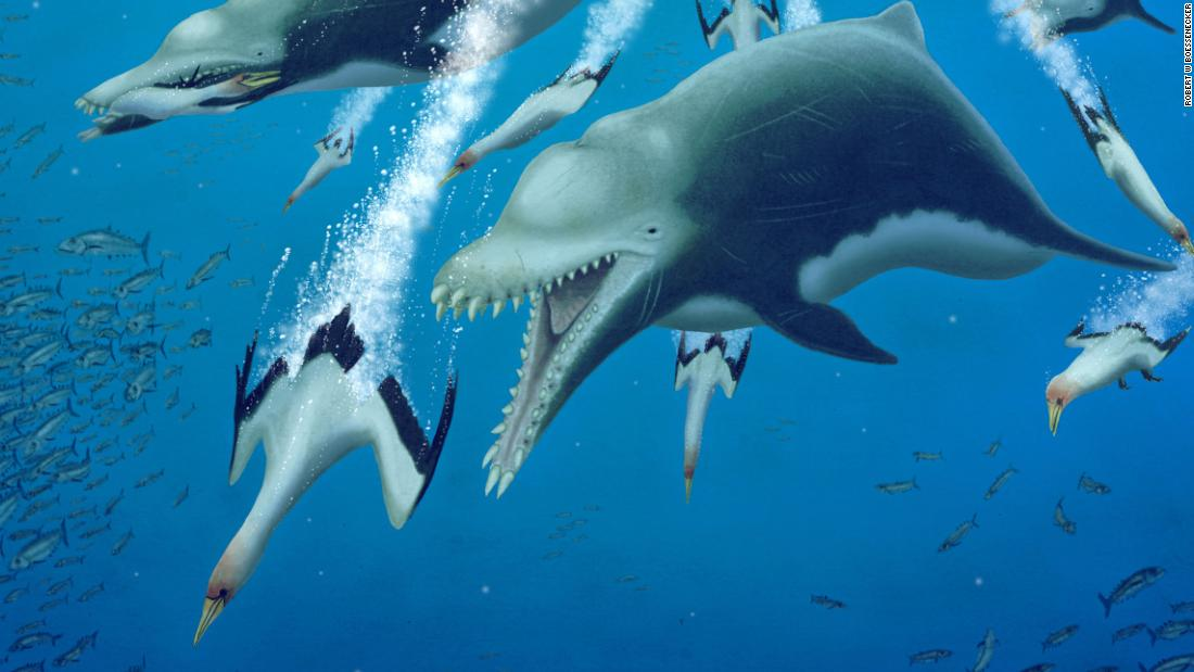 An extinct giant dolphin was more like a killer whale, study finds