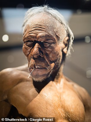 Artist impression of a Homo erectus adult male