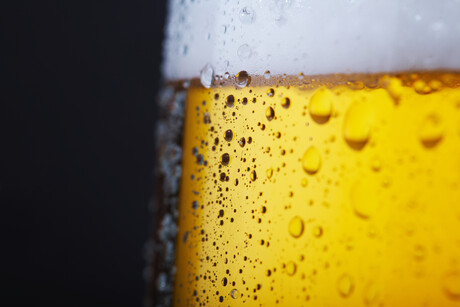 Wild yeast, algae and the science of beer and wine