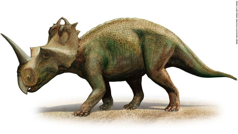 'Gnarly' tumor shows dinosaurs got cancer, too