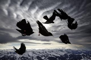 Bird image by Alessandra Menikonzi