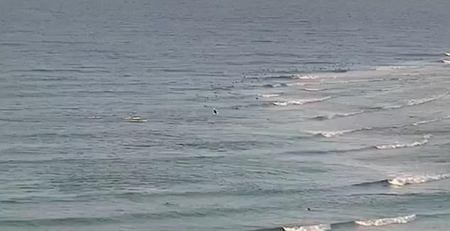 Surf cameras captured the moment Mister Slater was killed by a great white shark on the Gold Coast in the first fatal attack in the area since 1958.
