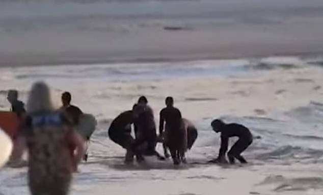 Slater is helping surf mates and beachgoers after being bitten by a shark on Tuesday