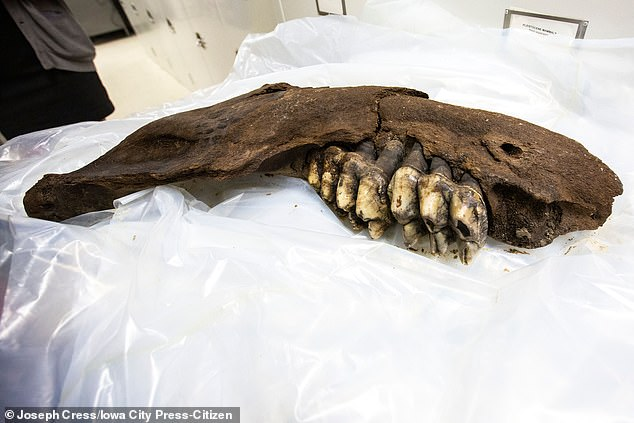 Another young explorer discovered the jaws of a mastodon on a farm in southern Iowa last year. A row of teeth still attached to the bone is the second fossil to be discovered on the farm in the past 30 years