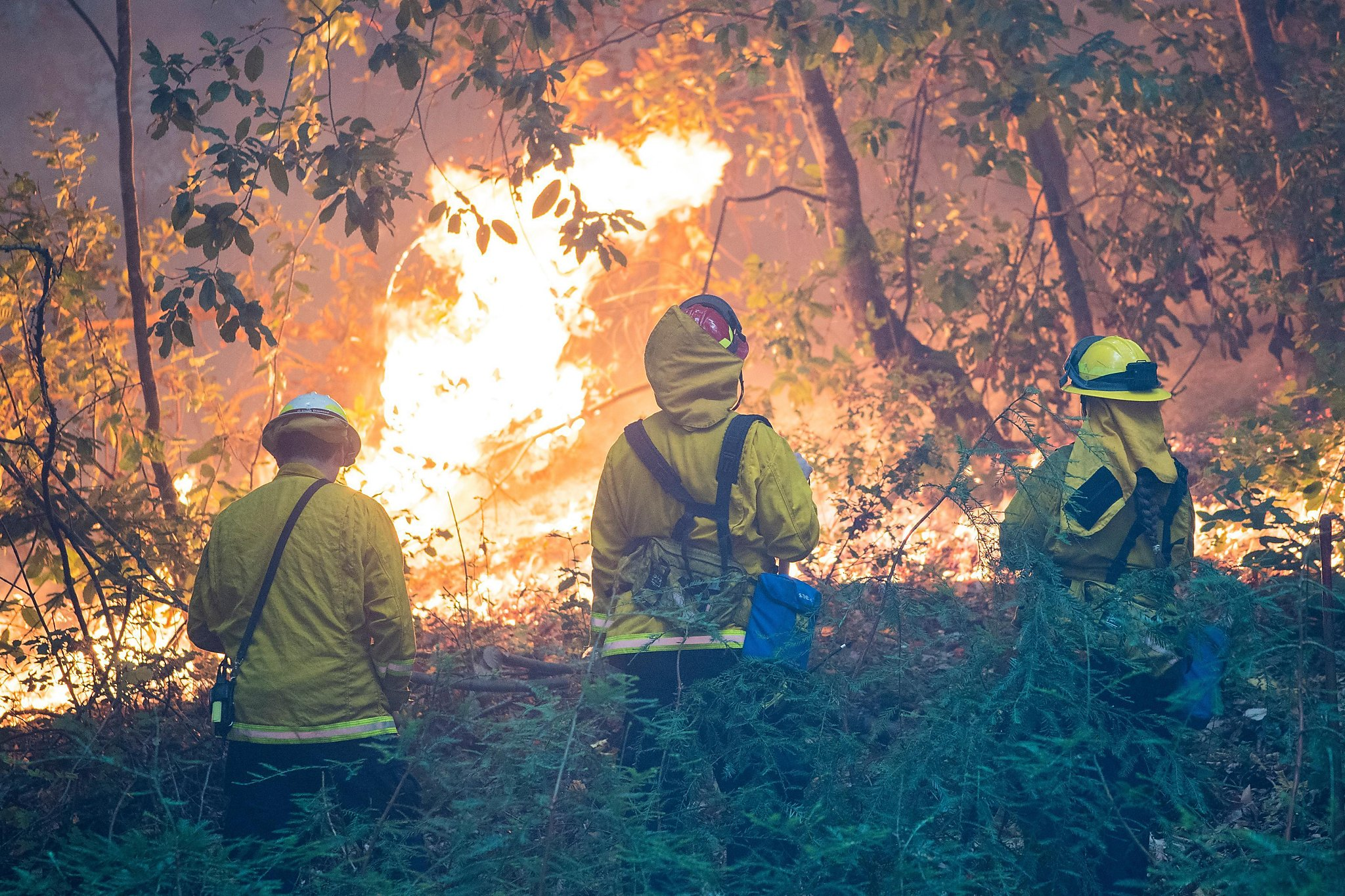 California fires explode: new evacuations from North Complex fires in Butte and Diplomac counties, Zug Fire in Shasta County