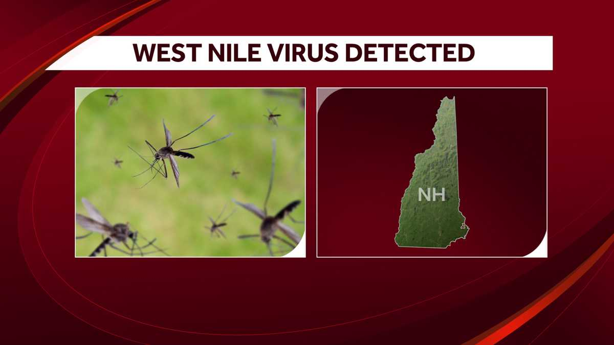 West Nile Virus Returns With 1st Positive Test In McLean County