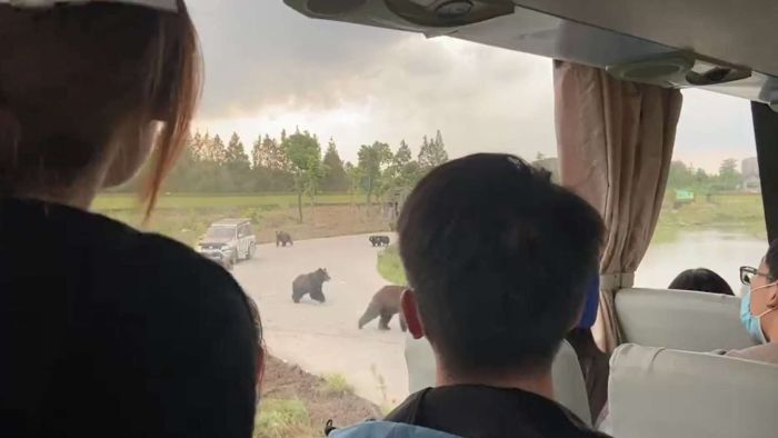 Zuckerbear is attacked by bears at the Chinese Wildlife Park while terrified visitors watch