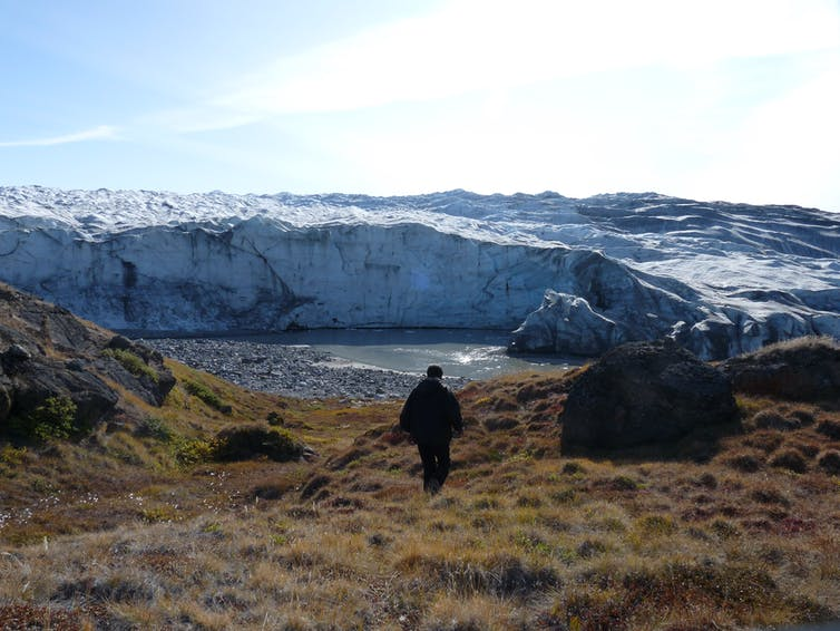 A man walks over a grassland with a glacier in the background