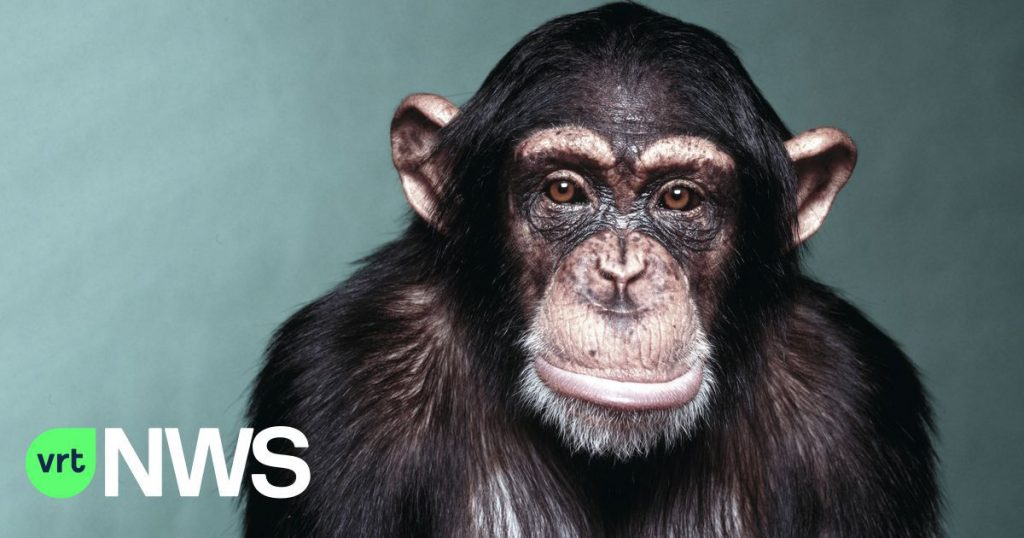 They'll turn us into a chimpanzee: 5 vaccine rumors and why we should take vaccine suspicions seriously