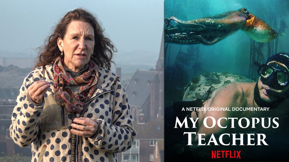My Octopus Teacher hit on Netflix: Made in Wijk aan Zee