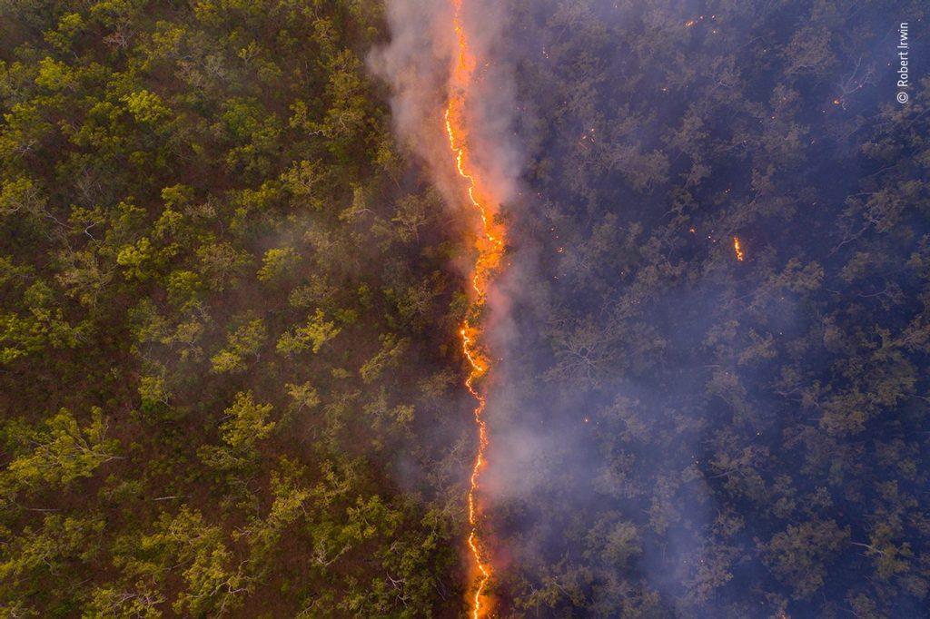 Australian bushfires win International Wildlife Photo Award - Early Birds