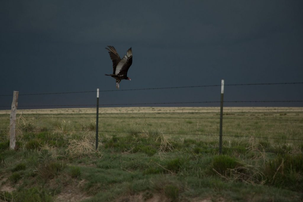 Lasers, Cannons, and Scarecrows: The surprisingly scientific approach to fending off vultures