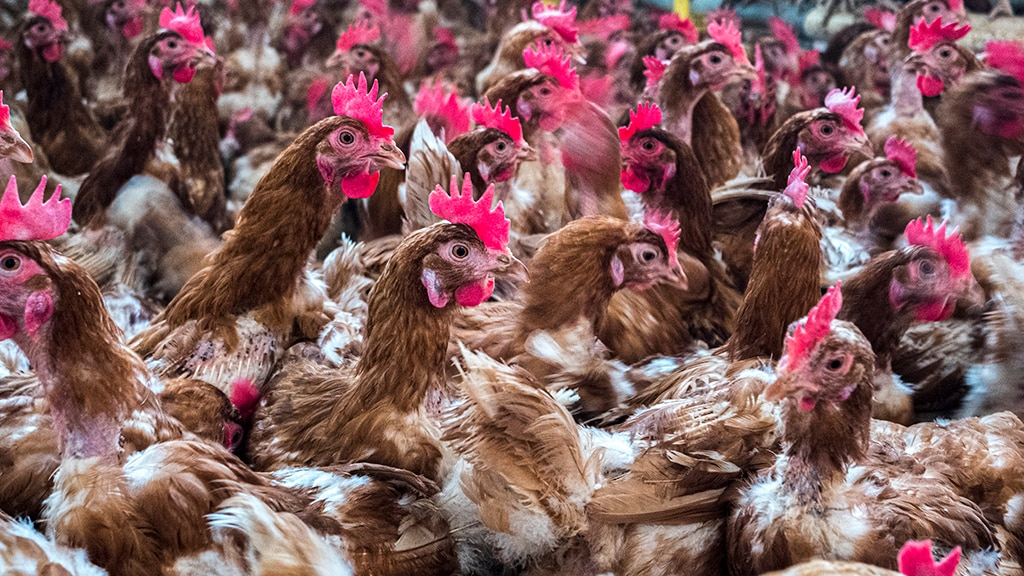 Russia has reported its first case of bird flu in humans