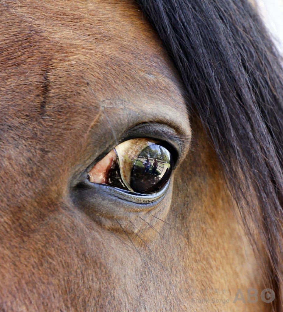 Flying horses in Switzerland - Horses.nl