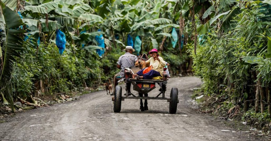 Projects are betting on food security in Antioquia