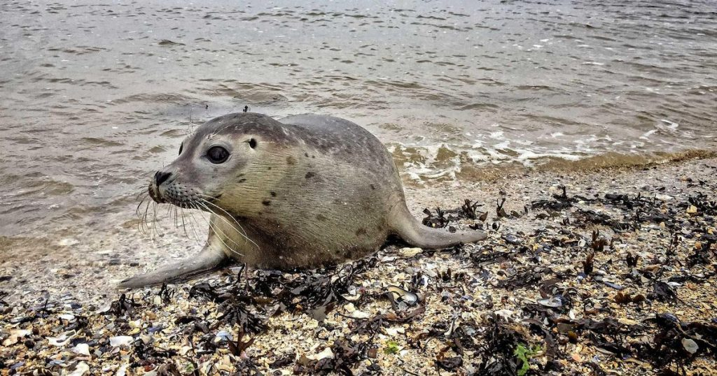 Seal sting in tail: a fine of € 480 |  Abroad