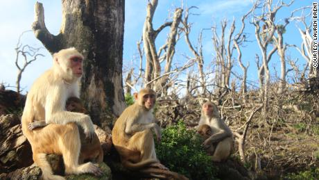 The rhesus macaques made new friends after Hurricane Maria.
