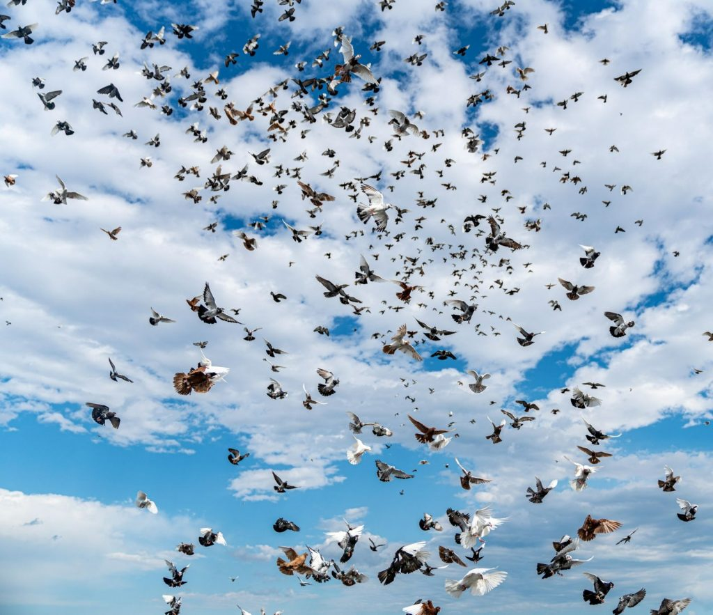 How many birds fly on the ground?