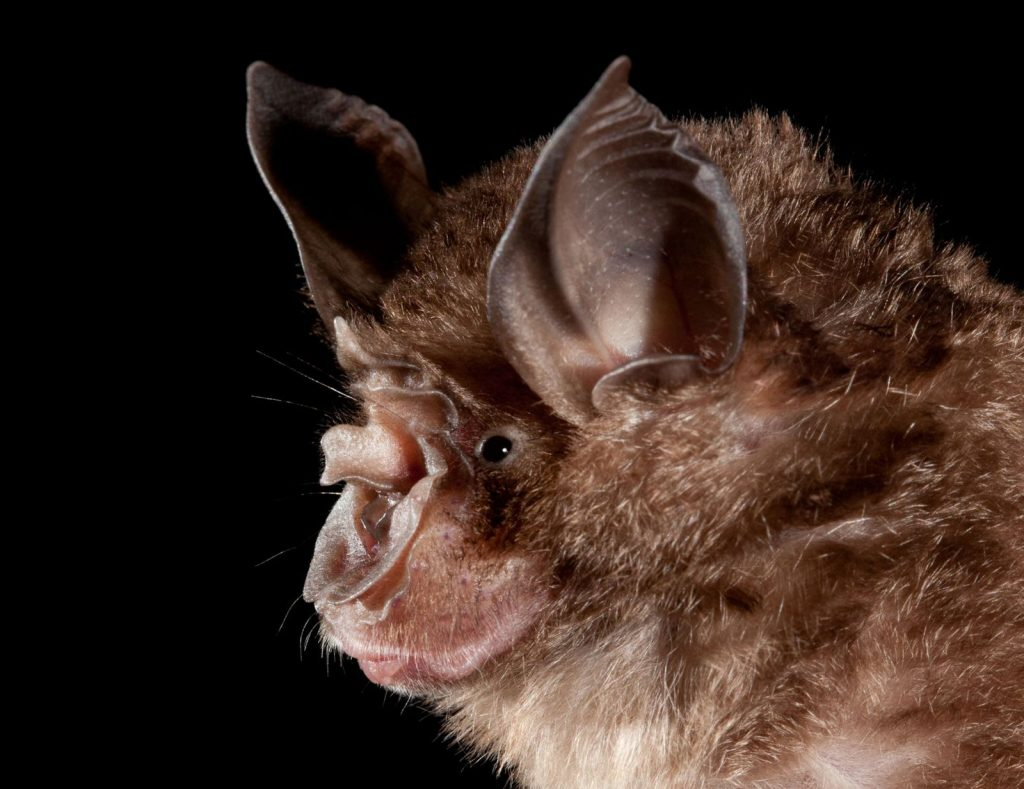 Humans create hotspots where bats can transmit zoonotic diseases