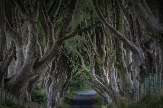 dark hedge ierland