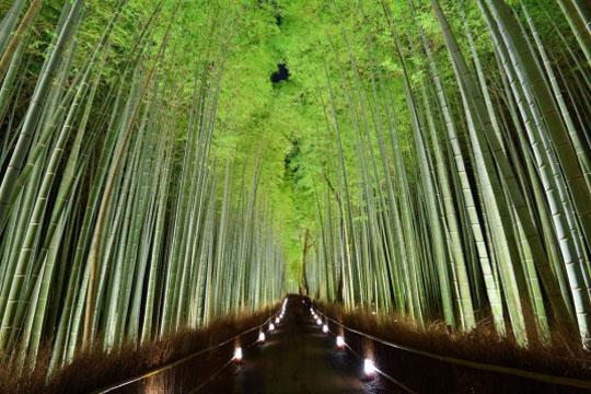 kyoto . bamboo pillow