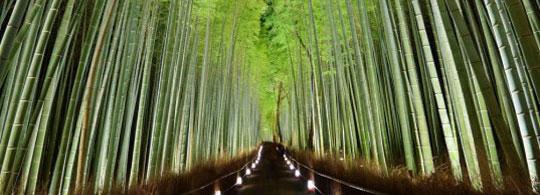 10 Beautiful Natural Fairy Tunnels |  good news |  good news