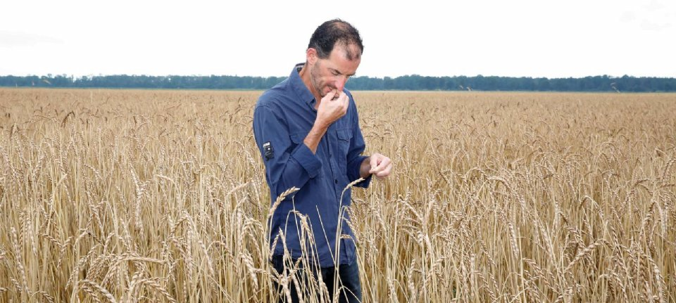 Cyclic bio-vegetation is increasing