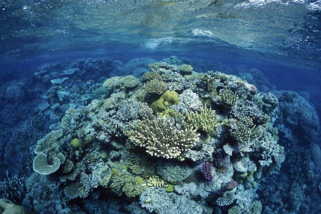 An exceptionally large, 400-year-old coral has been discovered in the Great Barrier Reef