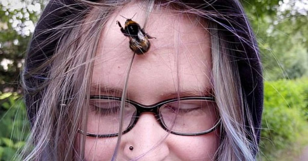 British teenager makes a wonderful friendship with a bee: 'My house follows me everywhere, to the bowling alley' |  Abroad