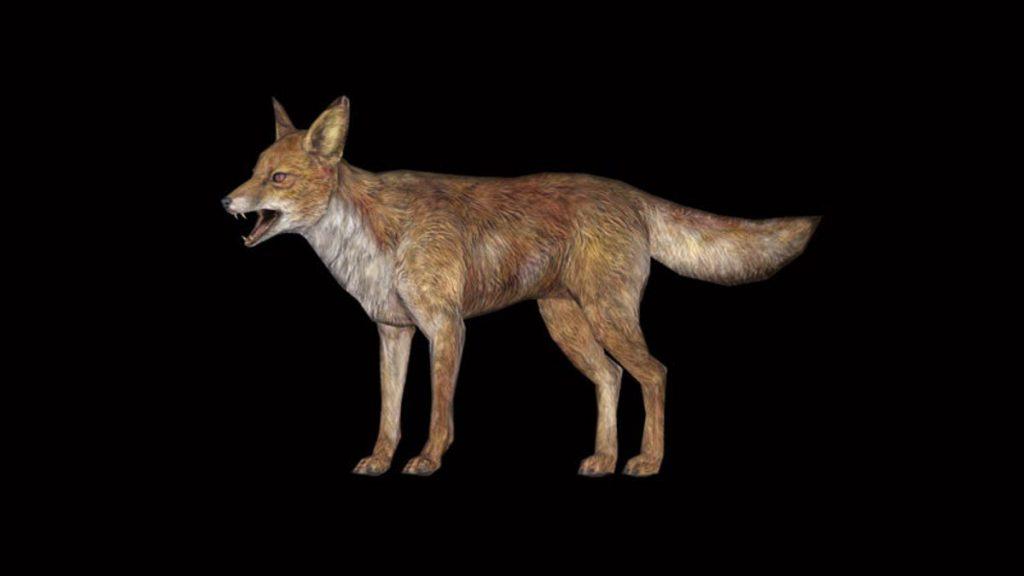 Skyrim's foxes take you to the treasury.  cam.