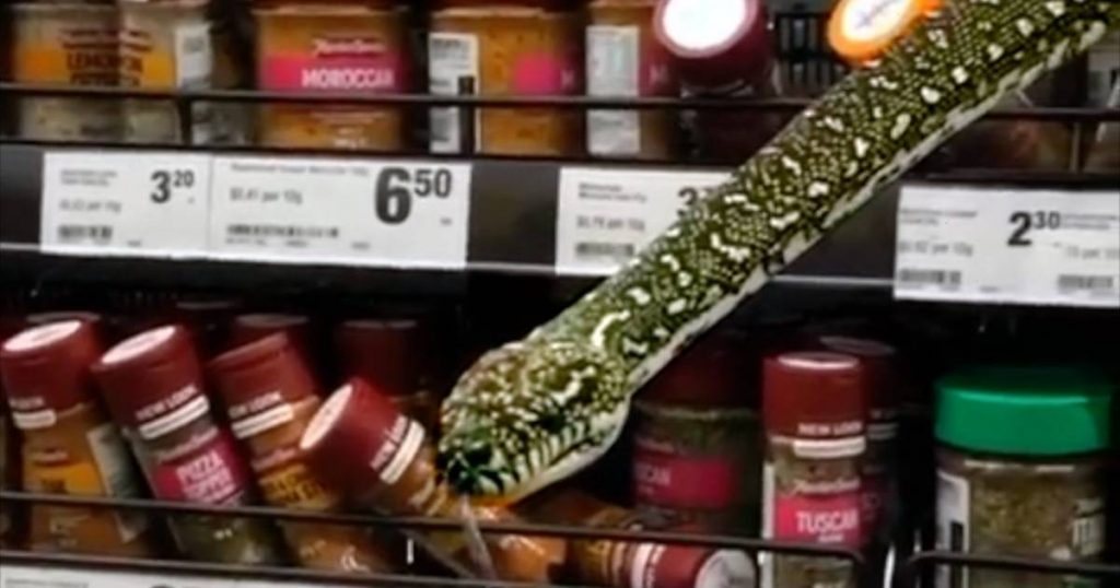 """Snake crawling in the grass in an Australian supermarket: """"20 cm from my face""""    The best thing on the web"""