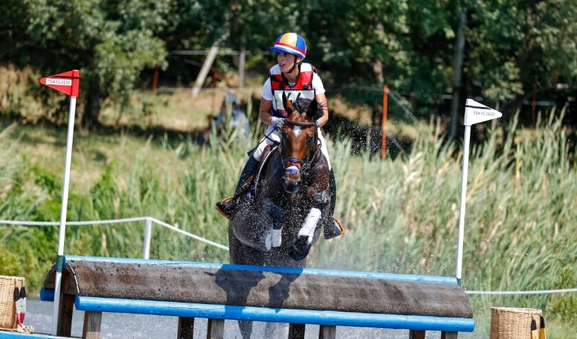 European Racing Championship |  Dutch racehorses pass the veterinary examination quickly