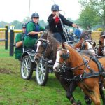 Orange pony drivers in a golden course – Horses.nl
