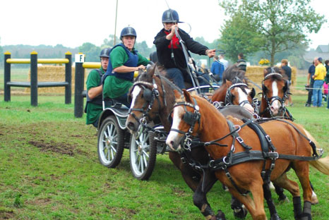 Orange pony drivers in a golden course - Horses.nl