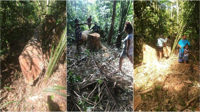 Pikin Poika encountered illegal logging