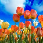 From Tulips To Legal Tender: The Brief History Of Bitcoin