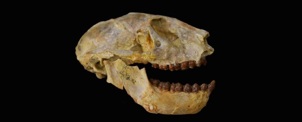There was a terrifying mass extinction 30 million years ago, and we just noticed it